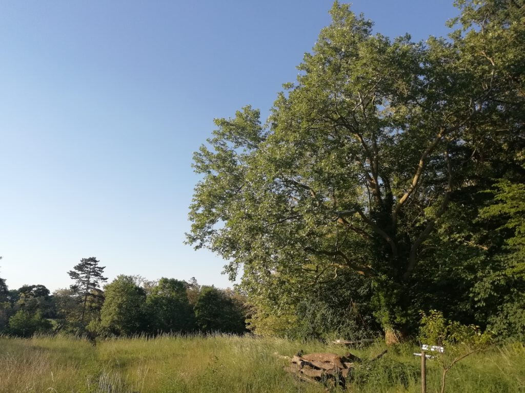 Surroundings view with a tree